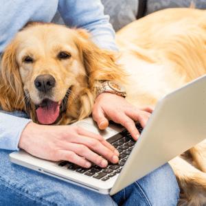 1080x1080 Pets in Office