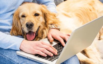 1700X1000 Pets in office